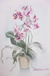 Mother's orchids 2