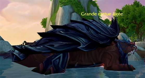 mop-patch54-ile-temps-fige-grande-tortue-agee
