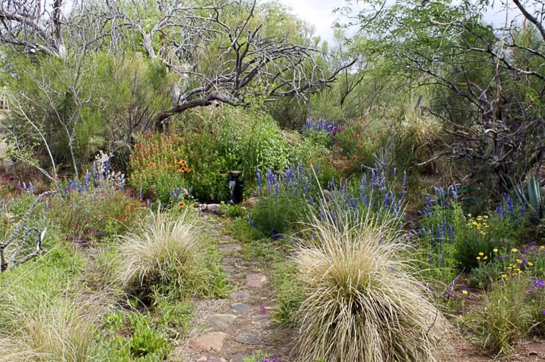 Pollinator Garden Path