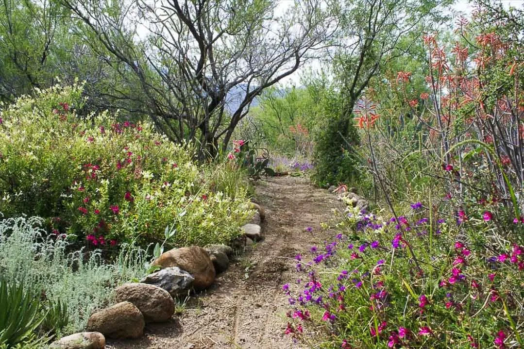 Back Garden Path