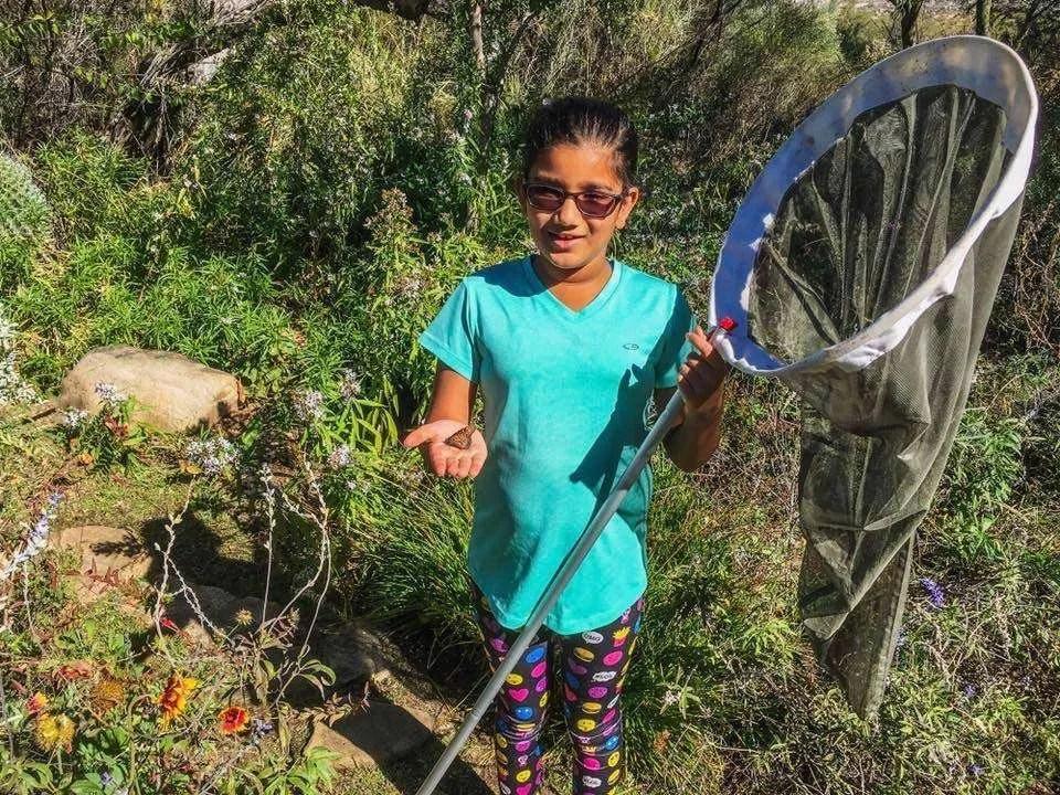 Catch & Release with Butterflies! Kid-friendly