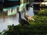 Unsere Nachbarn vom Oxford Canal