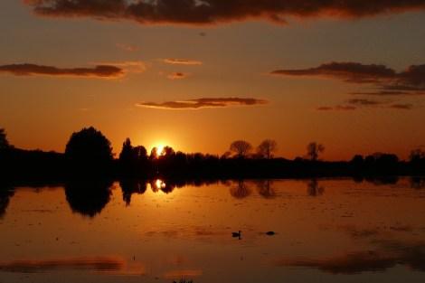 Fast unwirklich schön, dieser Sonnenuntergang bei Port Meadow. Wie gut, dass es uns immer wieder zu einem Abendspaziergang nach draußen zieht!