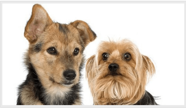 Puppys_1517190920406.PNG