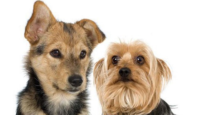 dogspets_1517229506963.jpg