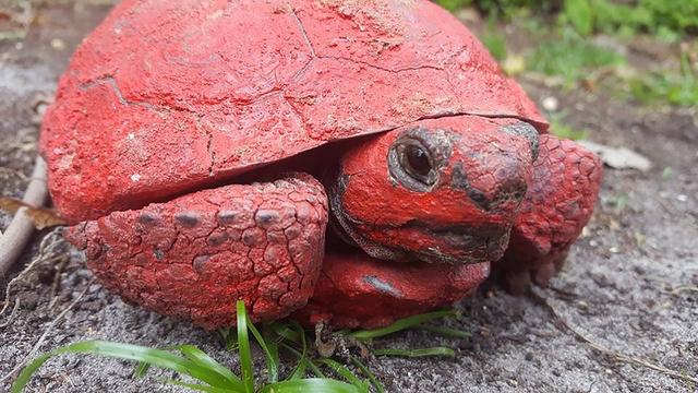 tortoise_1524140018862.png
