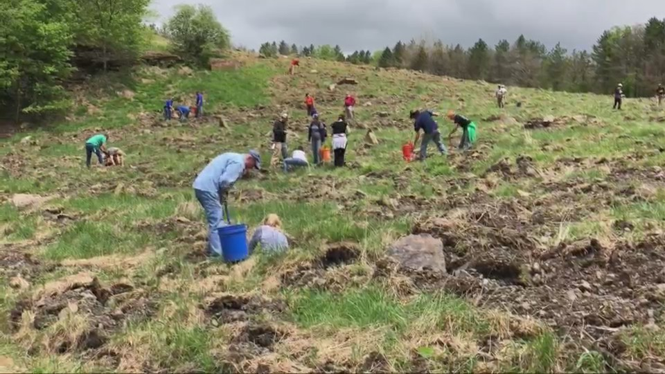Dozens of acres reclaimed in the Monongahela National Forest