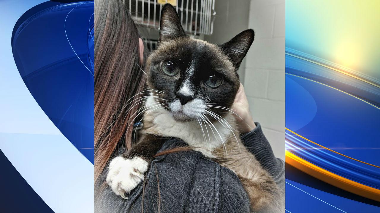 Cat Reunited after 8 years_1554219384399.jpg.jpg