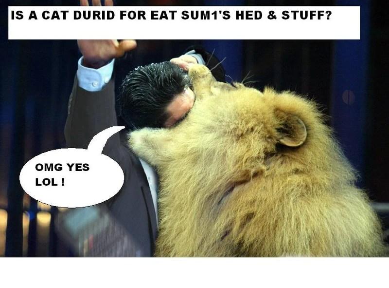 Cat durid is 4 fite