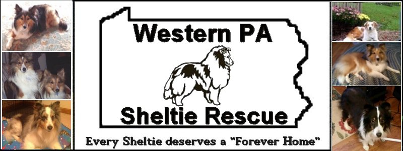 Pennsylvania Sheltie Rescue