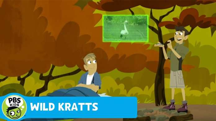 WILD KRATTS | Who Are You Calling A Turkey? | PBS KIDS