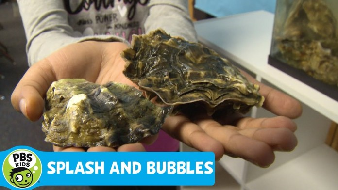 SPLASH AND BUBBLES | Get Your Feet Wet: Oysters | PBS KIDS