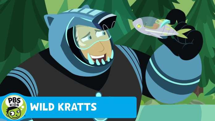 WILD KRATTS | Who's the Best Fisher Bear? | PBS KIDS