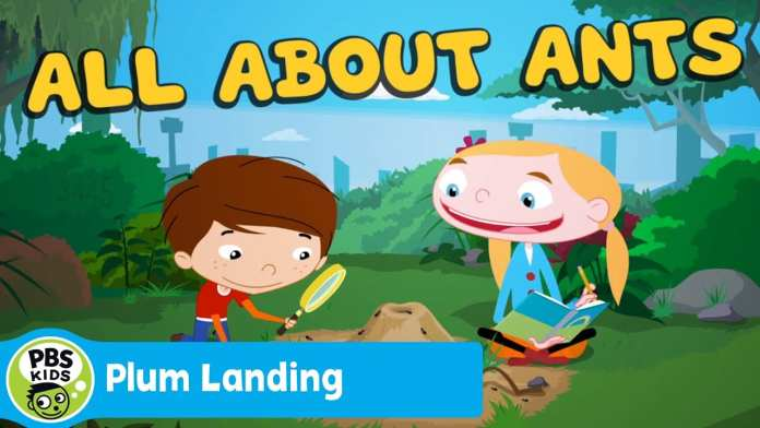 PLUM LANDING | All About Ants | PBS KIDS