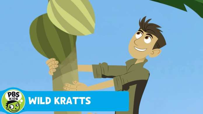 WILD KRATTS | Puffin Power | PBS KIDS