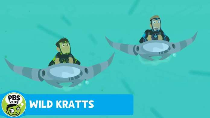 WILD KRATTS | Sailfish Speed! | PBS KIDS