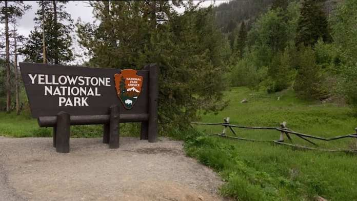 COVID-19's effect on Yellowstone tourism