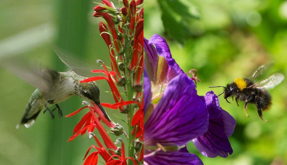 Birds vs  Bees  Study Offers New Clues about How Flowers Evolved to     Bee vs  Bee