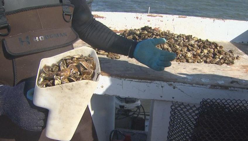 oyster farming_230328
