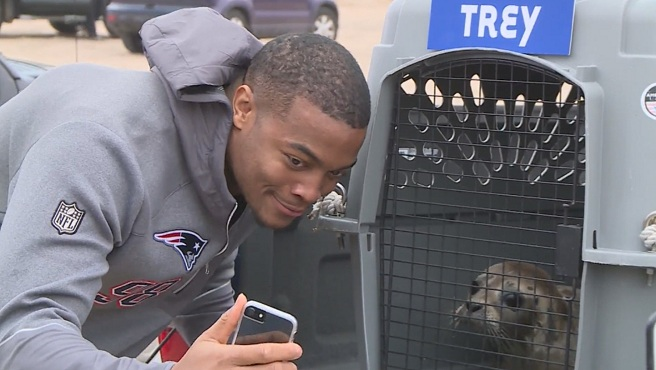 Trey Flowers and harbor seal_433580