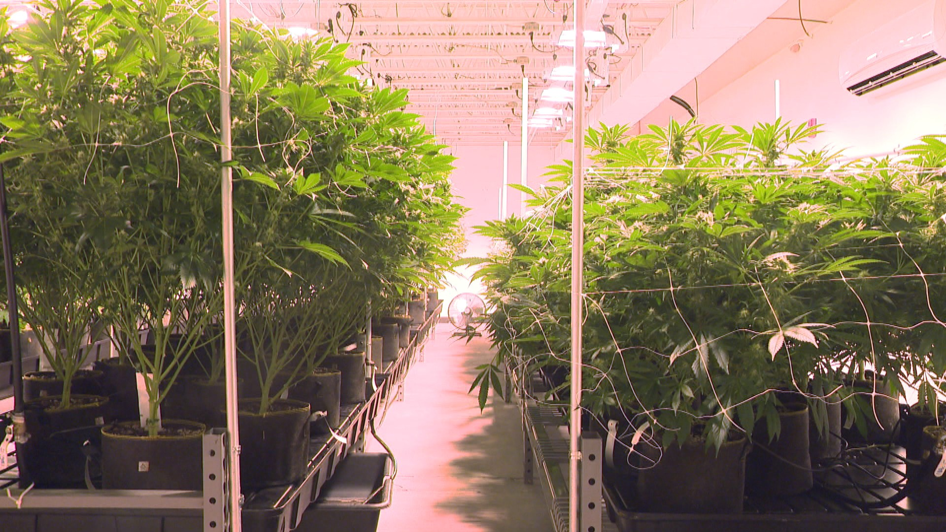 WEED GROWING 6PM PKG3_651611