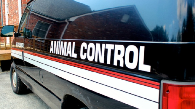 Animal Control generic resized