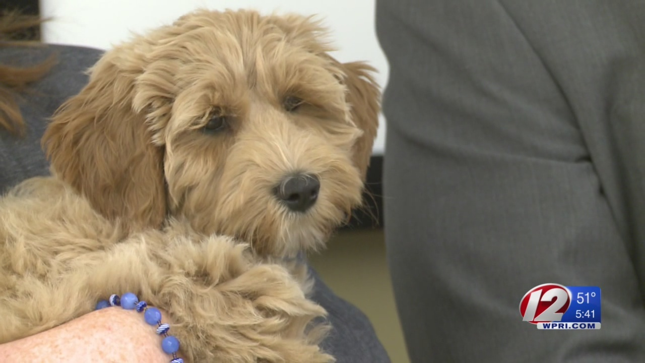 Therapy dog hired to help young victims at Cranston PD, Hasbro