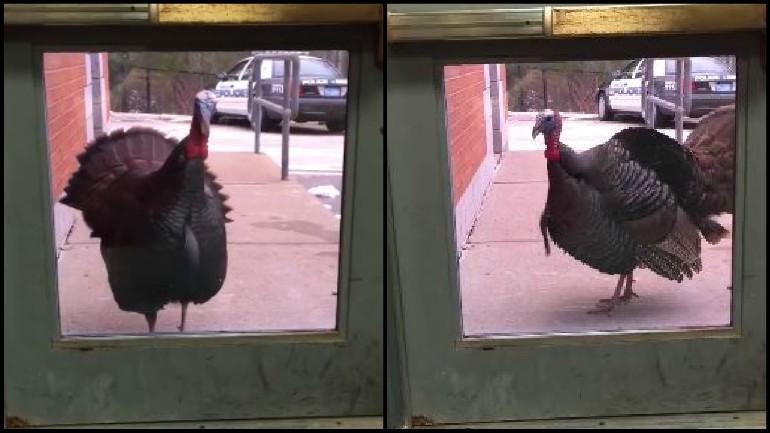 turkey collage_1542772256047.jpg.jpg