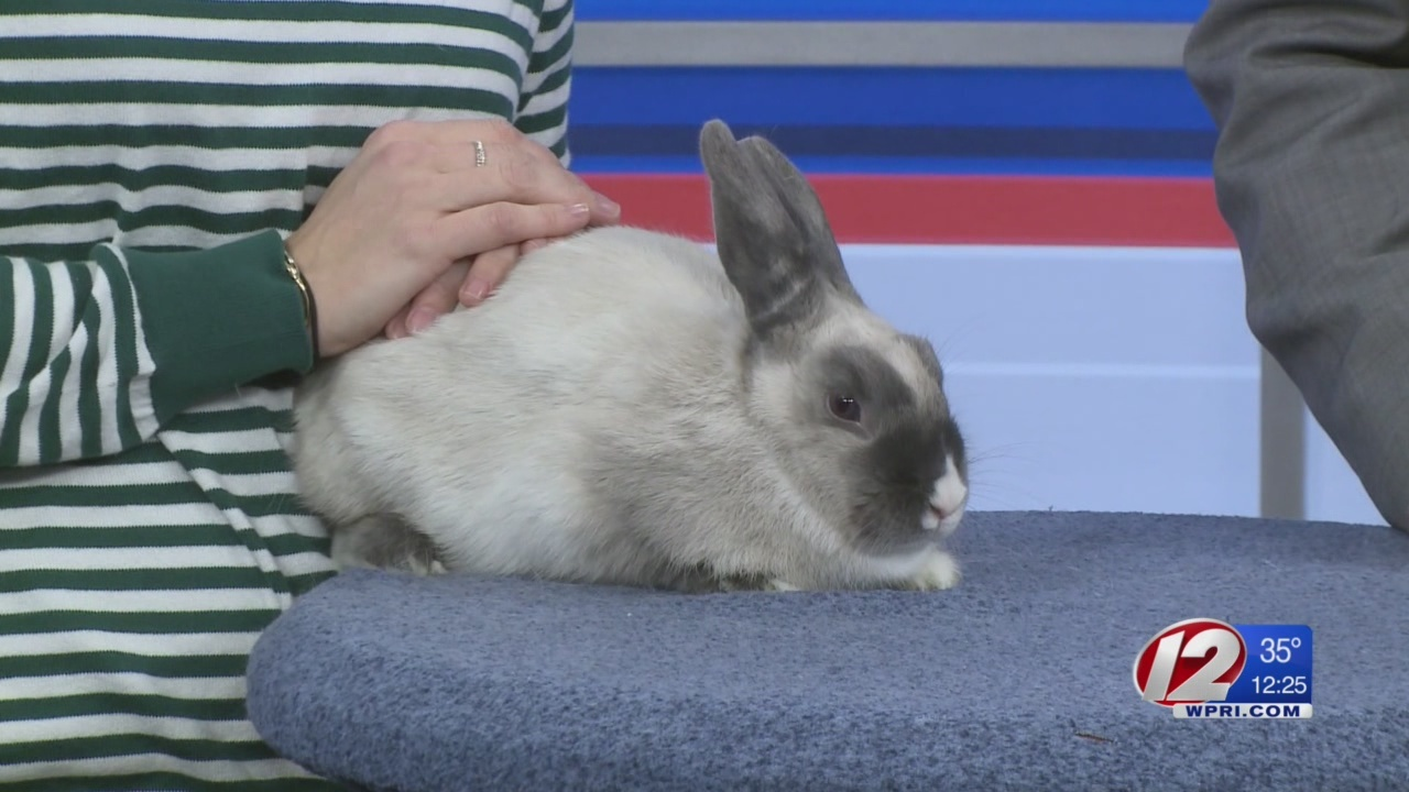 Rescue a Pet: Blanche