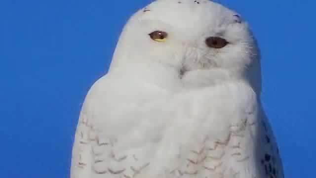 FindMyRI: The Snowbird
