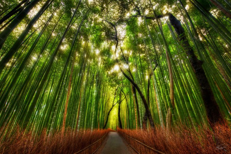 Bamboo Forest by Trey Ratcliff from the blog www.stuckincustoms.com