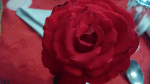 Lumia 720 Macro Red Rose