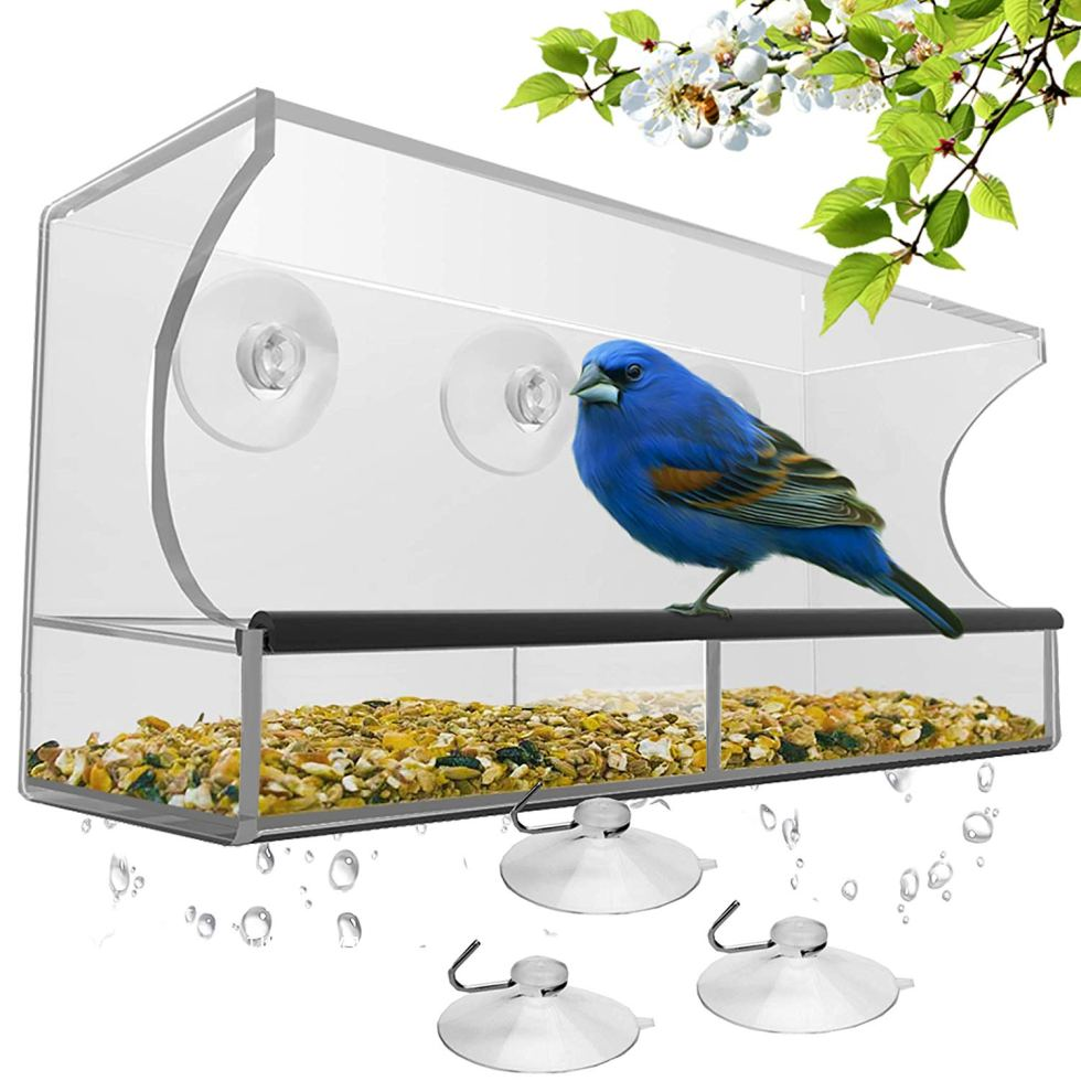 Window Bird Feeder for birding