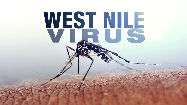 west nile virus_120633