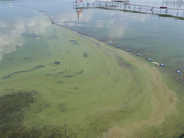 Toxic Algae Bloom In Doctors Lake Threatens Swimmers' Health