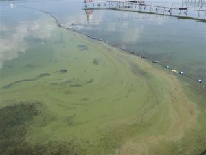 Schumer Calls on Congress to Approve Funding to Combat Harmful Algae