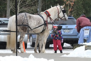 The Jamestown Audubon Nature Center's 2015 Snowflake Festival is coming up on Saturday, February 7. Horses, alpacas, sled dogs, reptiles, arachnids, and birds of prey like owls and the Nature Center's resident Bald Eagle are some of the animals that visitors will be able to enjoy.