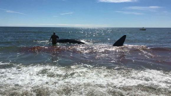 whale_509662