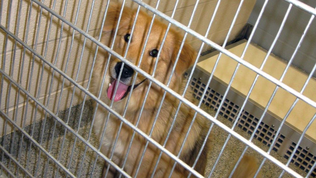 Delaware becomes first no-kill state for shelter animals in the US