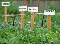 LBA Woods for Community Gardens