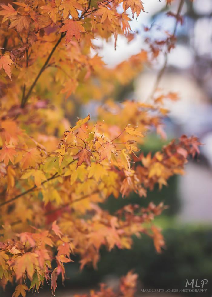 autumn, richmond, tasmania