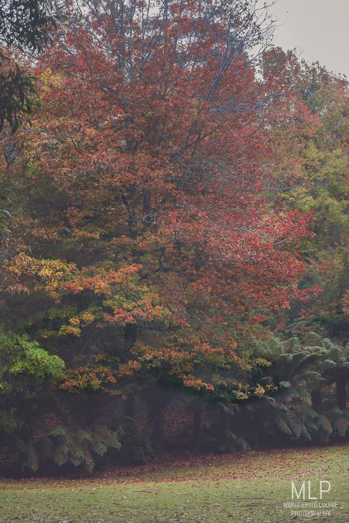 autumn leaves, trees, cataract gorge, launceston, tasmania