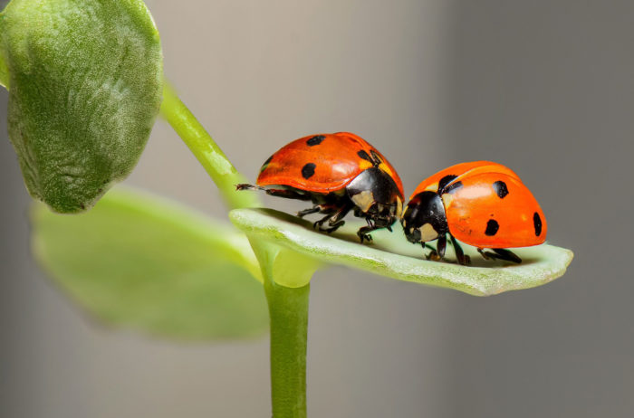 gratitude, grateful, nature, ladybugs,