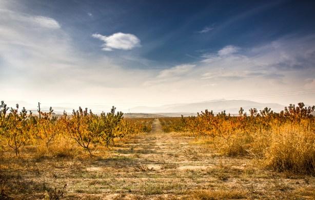 Autumn vineyard - how to lengthen a scene.