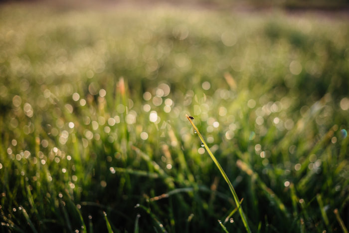 How to Be a Better Writer: Water the Grass — Write Right