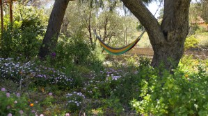 La Bodeguita Writing Retreat Garden & Hammock Dafni