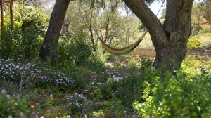 La Bodeguita Writing Retreat Garden & Hammock Dafni