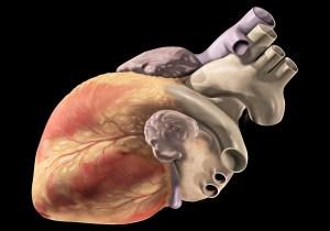 A human heart