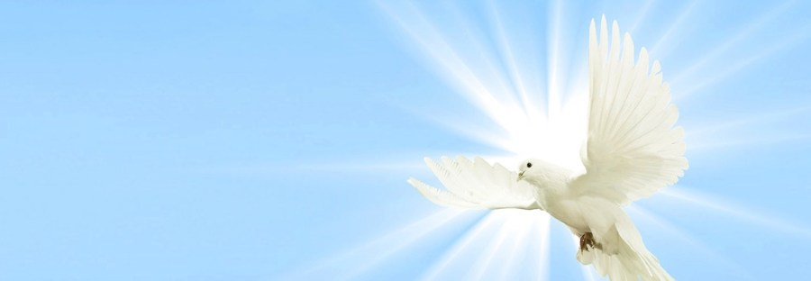 A dove flying against a backdrop of the sun and a light blue sky