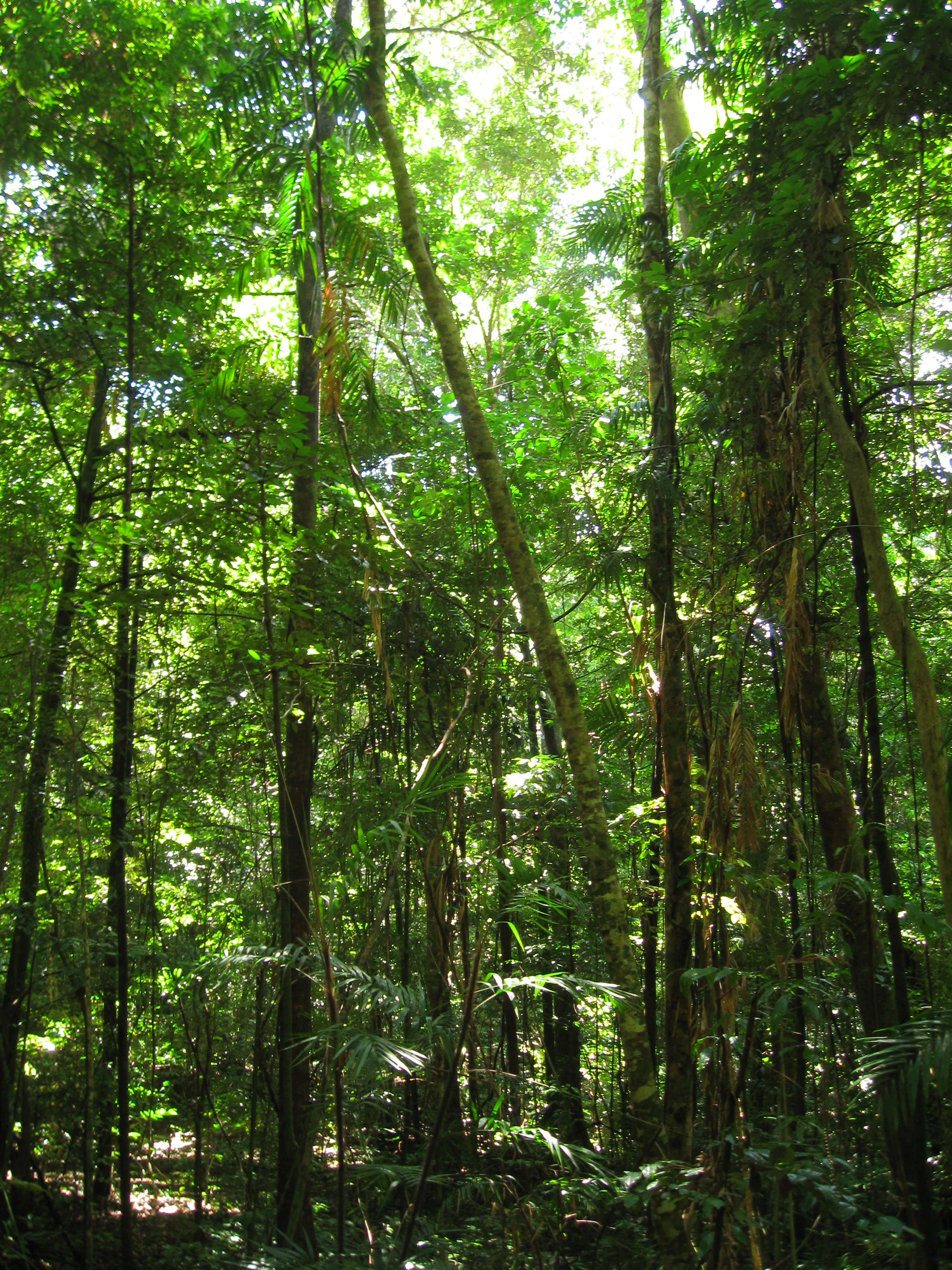 An Essay On The Flora And Fauna Of The Daintree Forest